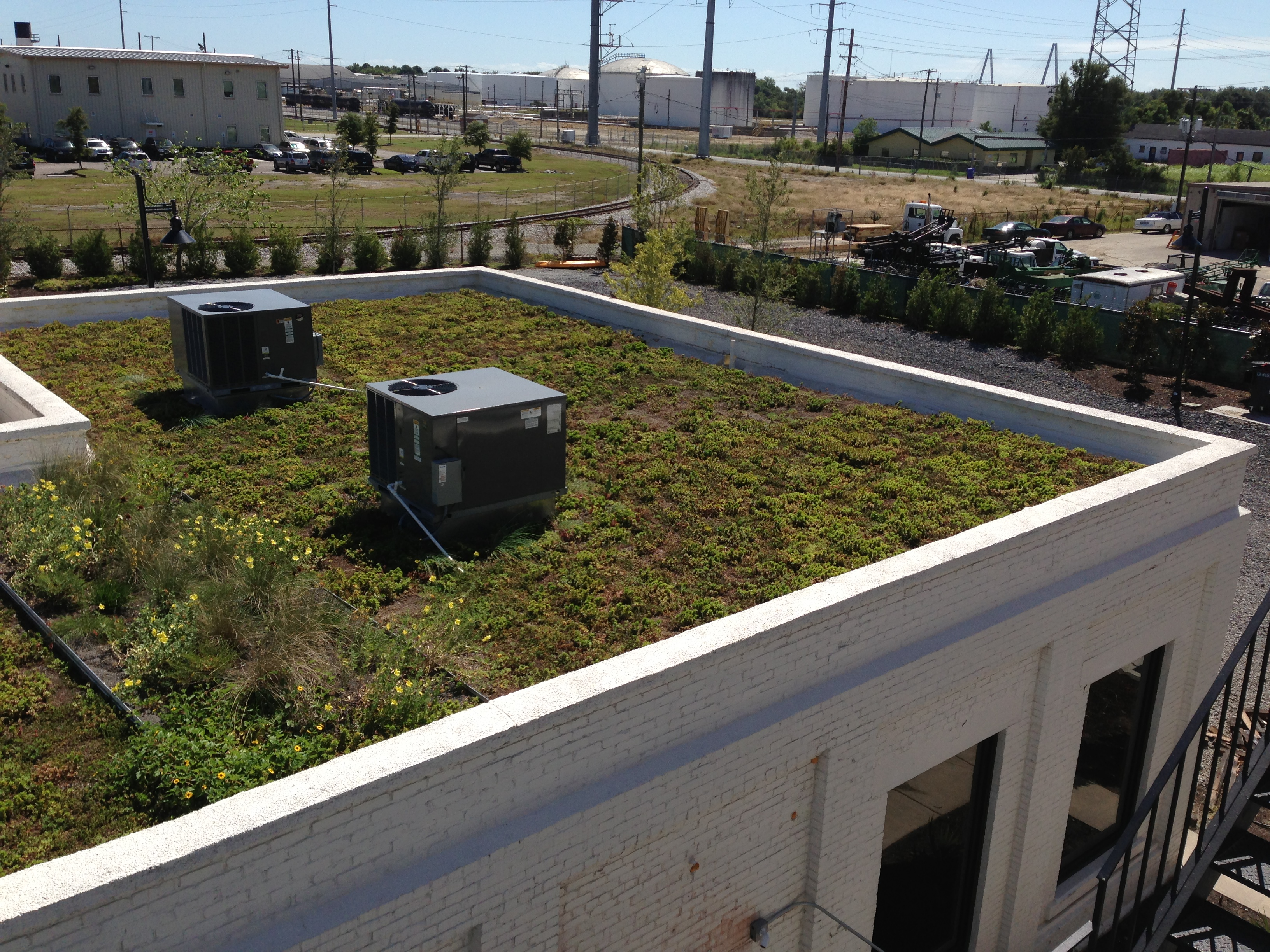 Greenroof at Local Works plant pic 8.25.14.jpg