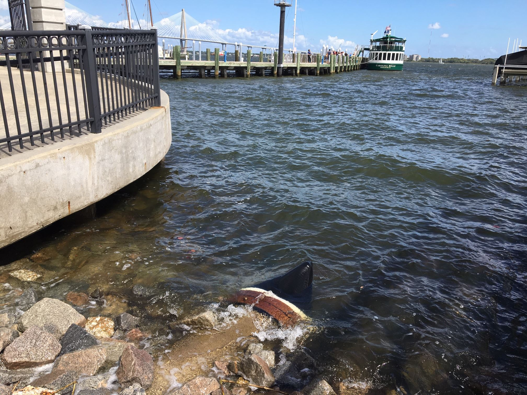 Stormwater outfall pipe enters into Cooper River, it has a duckbill type check valve, one that is being phased out for more efficient and effective in-line valves.