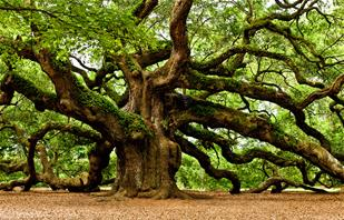 ANGEL OAK_thumb.jpg